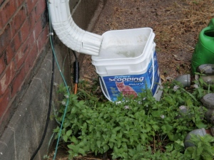 A neighbor would collect water in buckets and lug them back to her patio, until a tank was installed.