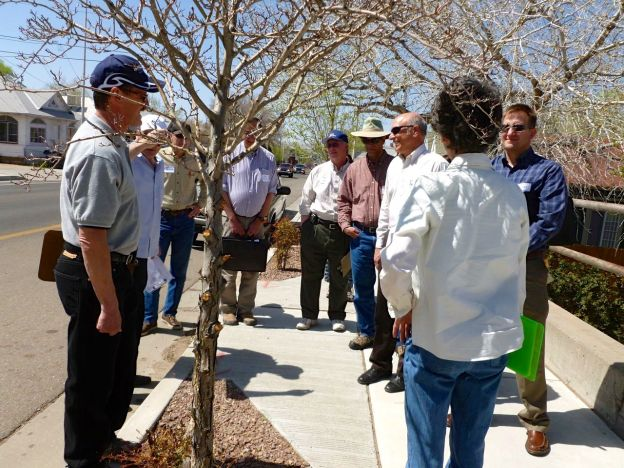 walkers in discussion around young curbside trees