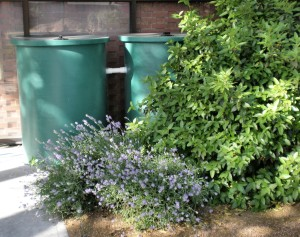 Rain barrels for a Rose Garden