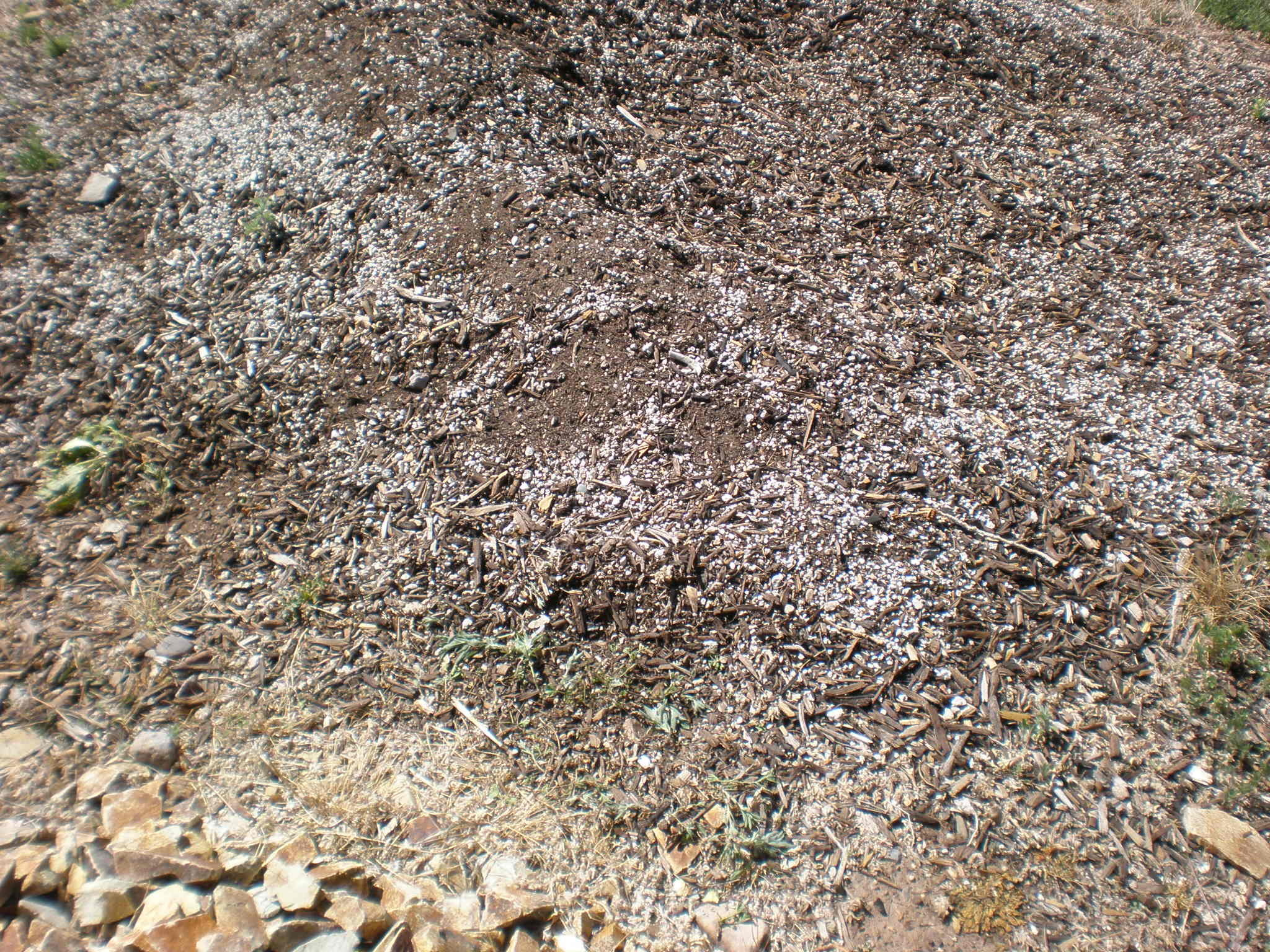 Compost querencia green for Soil and green