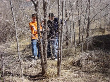 Invasive Elm trees formed a thicket before project.
