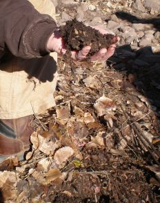 Jim Brooks finds healthy soil with organic material in the bioswale.