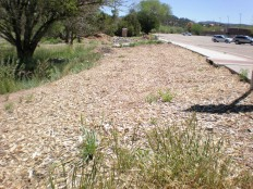 Repairs along the sidewalk include slope change, water catchments, seeds and mulch.