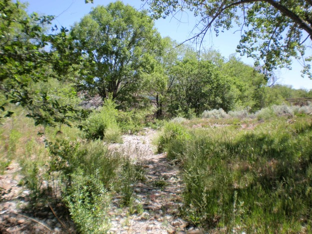 Tijeras Creek during a dry season. The remediation project is uphill on the left.